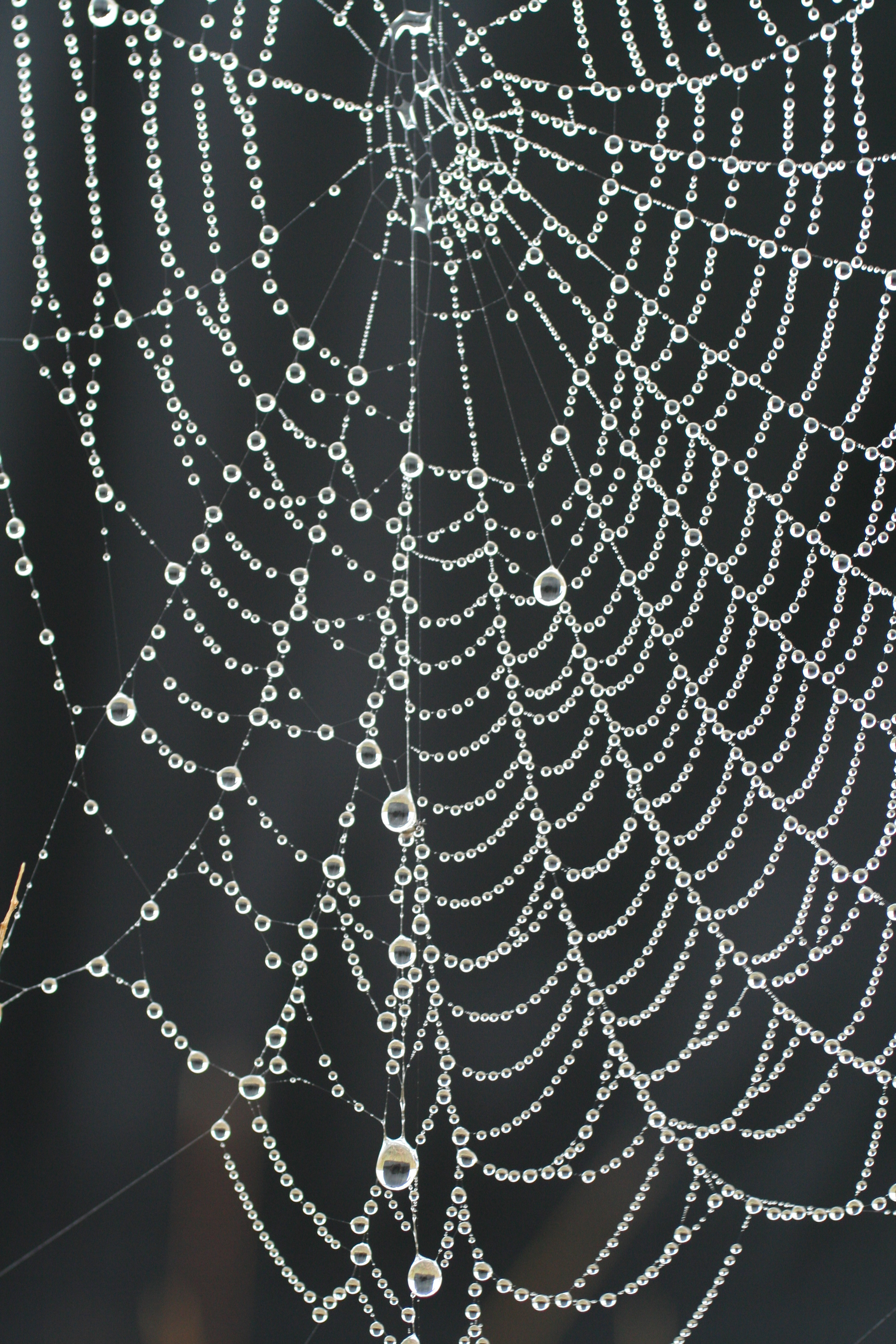 spider_web_necklace_with_pearls_of_dew-1