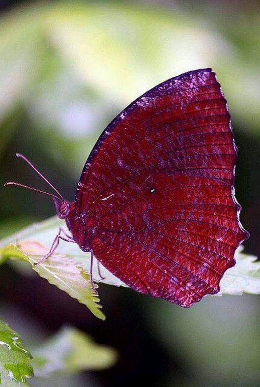 Butterflies-And-Moths-19