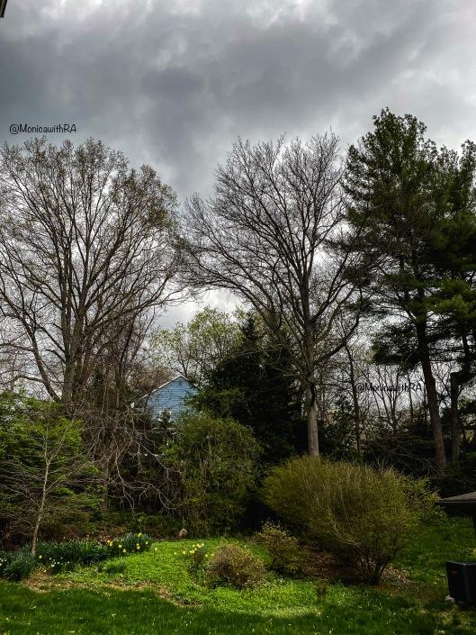 Washington DC Spring Storm    Monica w/ RA